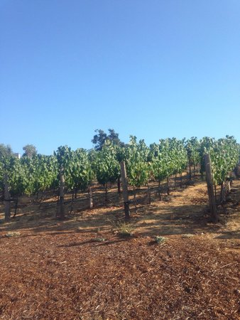 The Meritage Resort and Spa: Vineyards at back of hotel