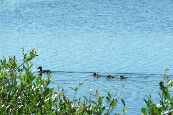 Erickson, Canada: Bird In One Of The Many Ponds