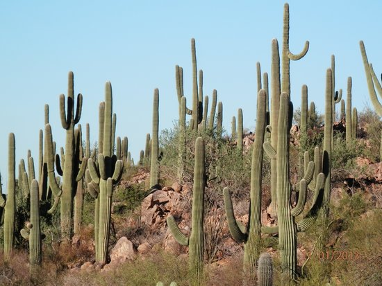 Parc national de Saguaro