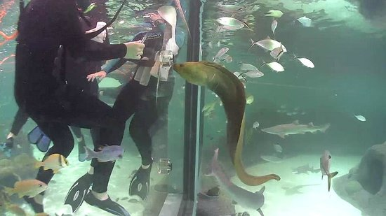 A Green Moray Eel Feeds On Fish From Participants In Our