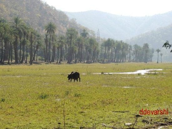 Ramgarh Sanctuary India Ramgarh Wildlife Sanctuary