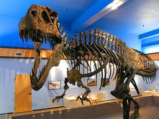 Idabel, OK: The Museum is also home to Acrocanthosaurus atokensis, the official State Dinosaur of Oklahoma.