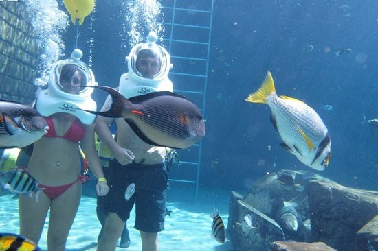 Underwater with the sharks - Picture of Aquaventure ...