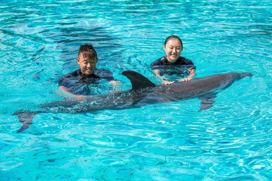 Swimming With Dolphins Dolphin Island Swim With The