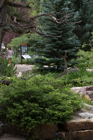 gardens picture of betty ford alpine gardens vail tripadvisor. Cars Review. Best American Auto & Cars Review
