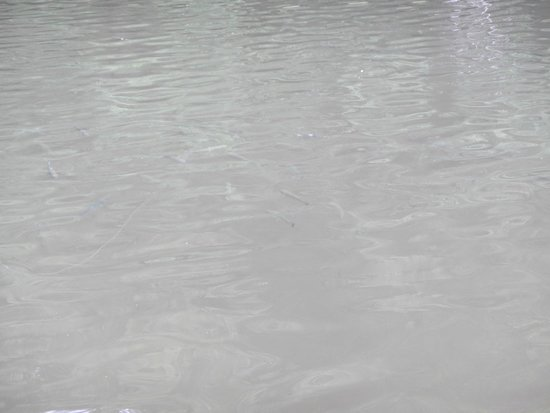 Almond, NC: You can see them swimming in the pond