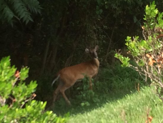 Residence Inn Arundel Mills BWI Airport: A deer in the little forest area near the hotel. Greeted me almost every morning on my walk to t