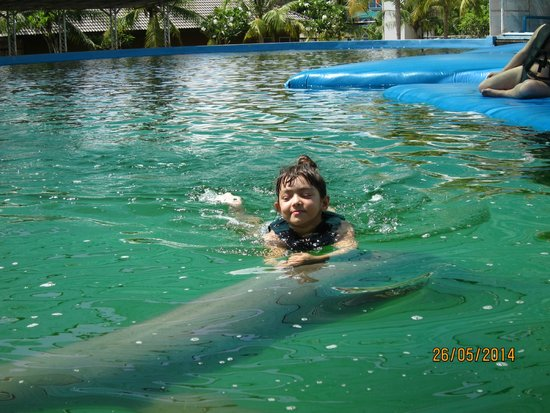 Get the Chance to feed them dolphins! note the fish i drop after the photo wa...