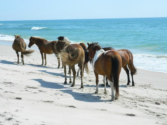 Camping On Assateague Island State Park