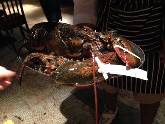 Biggest lobster yet at Oxford Circus weighing in at 15lb 8oz / 7kilos!! - Picture of Burger and ...