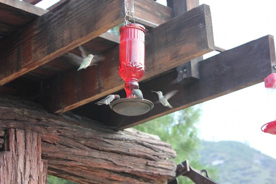 Kings Canyon Lodge: Hummingbird feeders