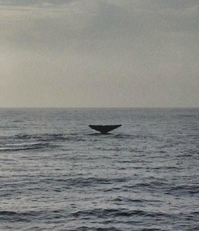 Whale tail 2 for Dana point fish report