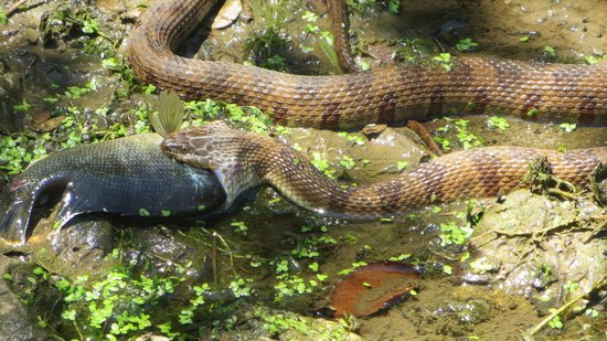 Pin another beautiful park hyatt hotel melbourne pictures for Snake eating fish