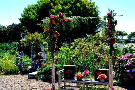 Wedding Day At The Fort Mason Community Garden Picture Of Fort Mason Center San Francisco