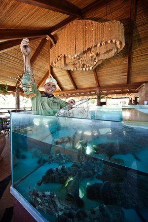 The Cove Live Seafood Restaurant