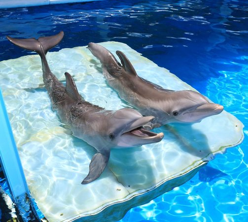 Clearwater Marine Aquarium Fl Hours Address Tickets