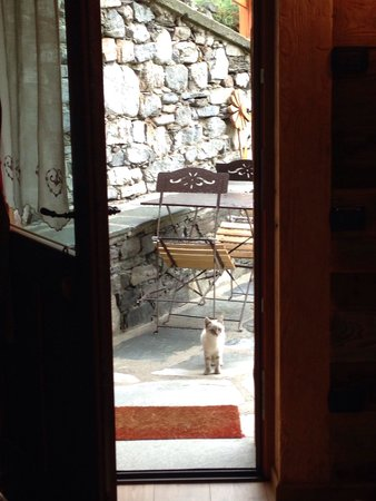 La Remisa Bed & Breakfast: Gattina curiosa