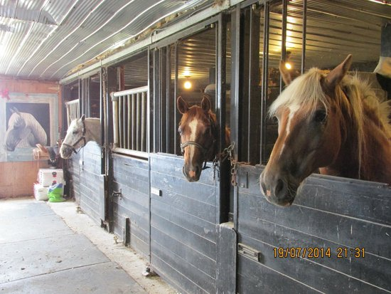 B & B On The Ranch: The horses, they are all friendly