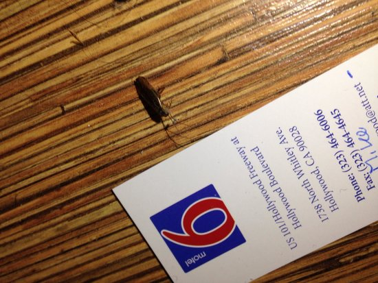Motel 6 Los Angeles - Hollywood: Roach in 105