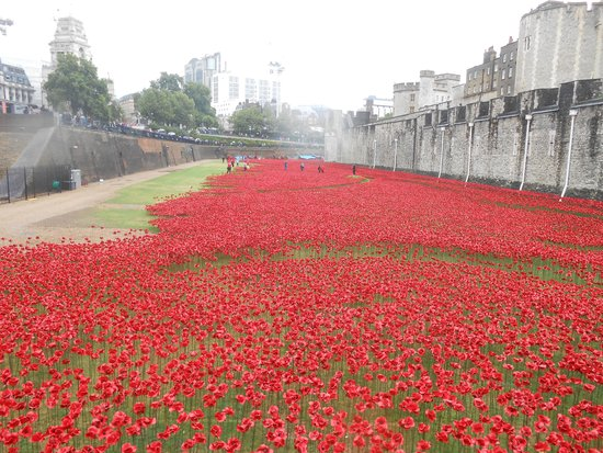 Tower of London Poppies Field Tower of London Field of