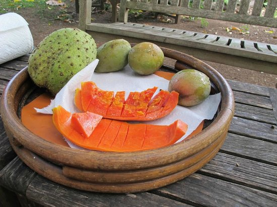 Guana Island: fruit sampling in the orchard
