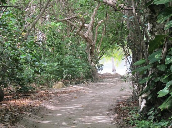 Guana Island: Path to the beach
