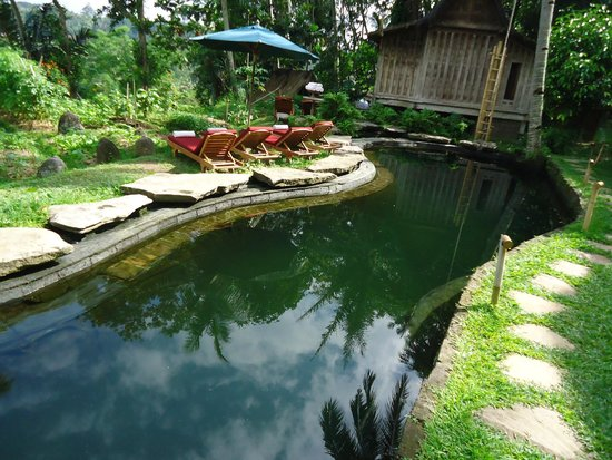 Natural Swimming Pool Without Any Chlorine Or Other Chemicals Picture Of Bambu Indah Ubud
