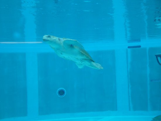 Winter And Hope Stars Of Dolphin And Dolphin 2 Picture Of Clearwater Marine Aquarium
