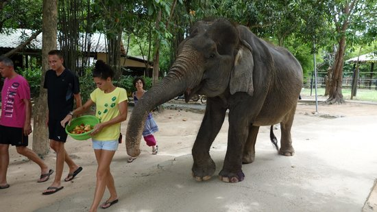 Photo provided by Wildlife Friends of Thailand - Wildlife ...