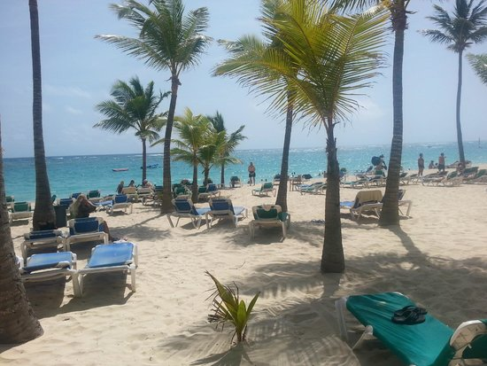 ClubHotel Riu Bambu: view of the beach area - note the palm tress and tons of beach chairs