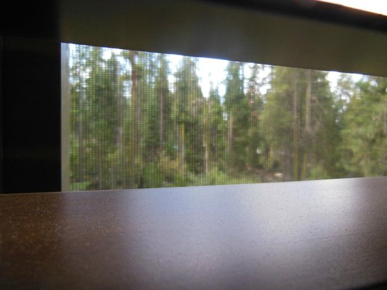 John Muir Lodge: view from our window