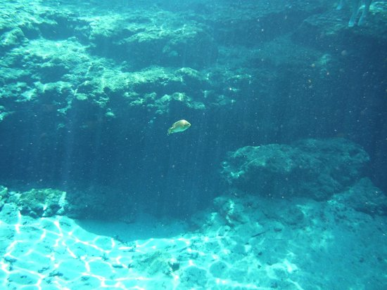 Fish picture of ginnie springs high springs tripadvisor for Fishing in gainesville fl