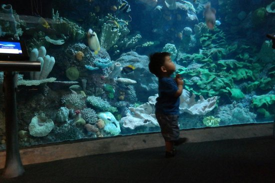 Inside Aquarium Picture Of Shedd Aquarium Chicago Tripadvisor