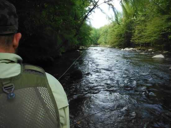 Fly fishing in the smoky mountains picture of smoky for Fishing in gatlinburg tn