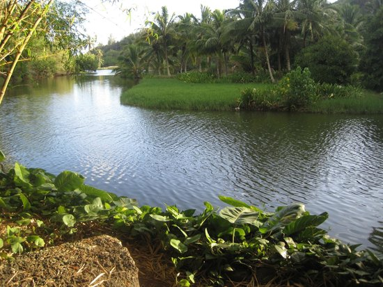 River At The Allerton Gardens Picture Of Allerton Garden Poipu TripAdvisor