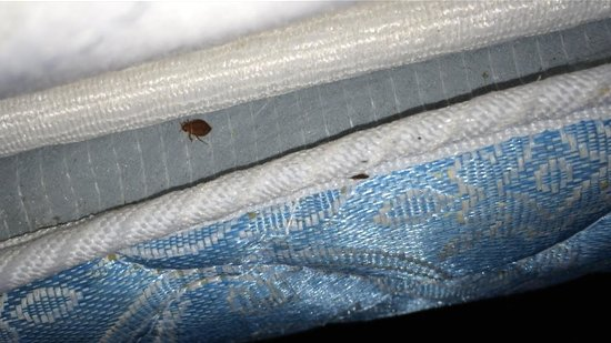 Comfort Inn Grove City Bed Bugs