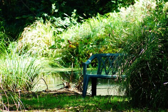 Shakti Cove Cottages: Pond next to our Cottage, lot's of sunshine and nature.