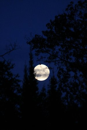 Blue Heron Bed & Breakfast: Super moon off the dock over Farm Lake 9-8-2014