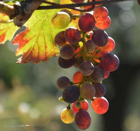Grape Tours - Day Tours