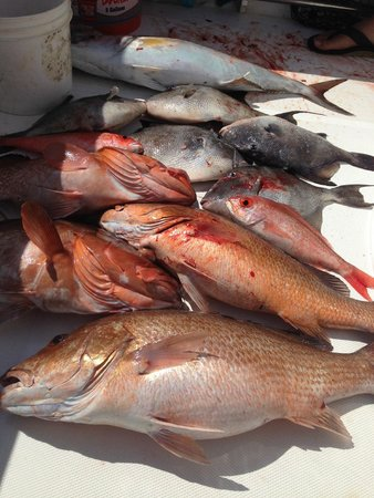 Nice mangroves red groupers and triggerfish picture of for Gulf angler fishing charters