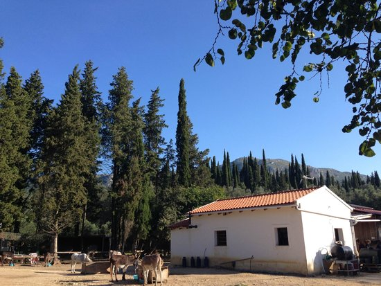 Corfu Donkey Rescue (Paleokastritsa, Greece): Address ...