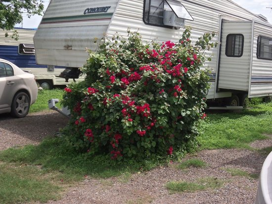 Photo of D&L RV Park Alamo