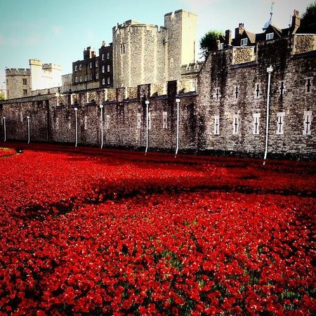 Art Installation Tower of London Poppies Tower of London Poppy Art