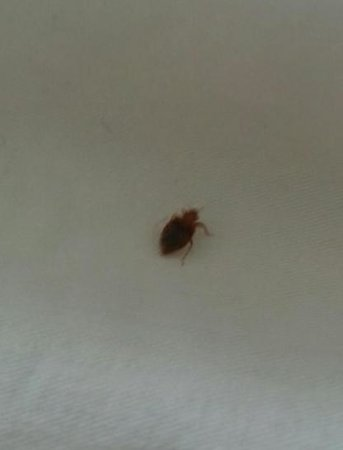 The Inn at Key West: bed bugs!