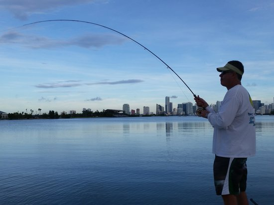 Biscayne bay fishing is hot picture of miami bonefishing for Biscayne bay fishing