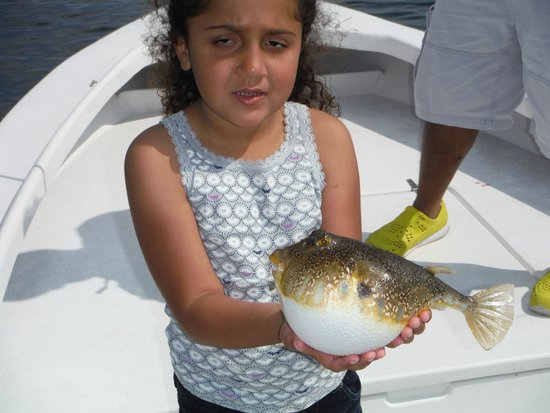Puffer fish picture of tampa bay fishing charters tampa for Puffer fish florida