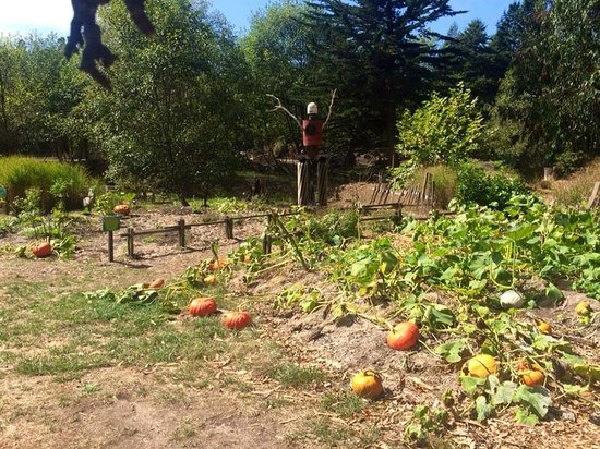 Pumpkin Patch Picture Of Mendocino Coast Botanical Gardens Fort Bragg Tripadvisor