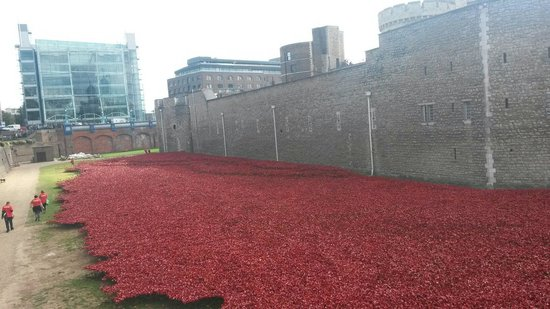 Tower of London Poppies Field Tower of London Ww1 Poppy