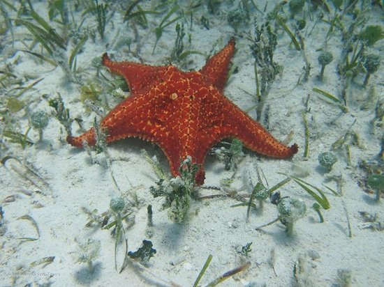 Starfish Point Grand Cayman Excursions