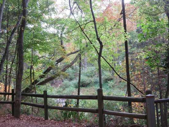 Radnor Lake State Park: It is a beautiful place to walk